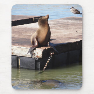 San Francisco Pier 39 Sea Lion Mousepad