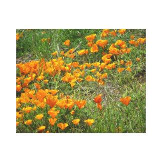 San Francisco Poppy Flowers Canvas Print