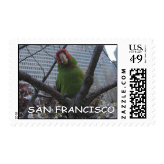 San Francisco wild parrot of Telegraph Hill Postage Stamps