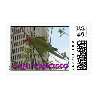 San Francisco wild parrot of Telegraph Hill Postage