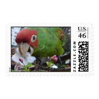 San Francisco wild parrot Postage