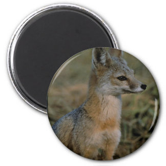 San Joaquin Kit Fox Refrigerator Magnets