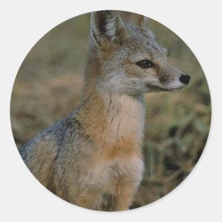 San Joaquin Kit Fox Stickers