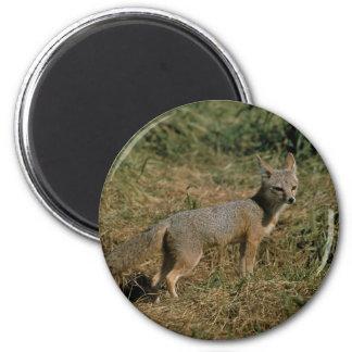 San Joaquin Kit Foxes Magnet