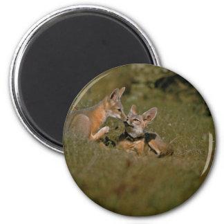 San Joaquin Kit Foxes Fridge Magnet