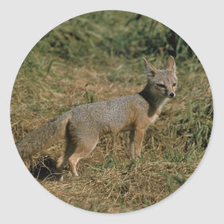 San Joaquin Kit Foxes Stickers