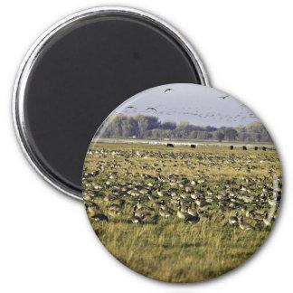 San Joaquin River National Wildlife Refuge, Califo Fridge Magnets