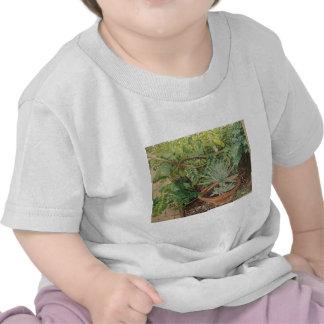 San Jose Mission Garden Painting Shirts