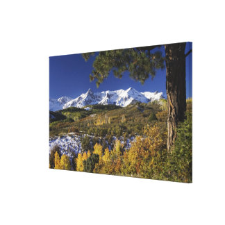 San Juan Mountains and Aspen trees in fallcolor Canvas Print