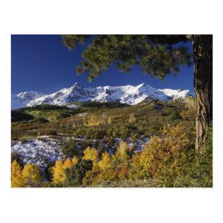 San Juan Mountains and Aspen trees in fallcolor Postcard