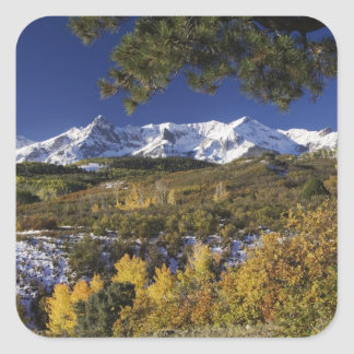 San Juan Mountains and Aspen trees in fallcolor Square Sticker