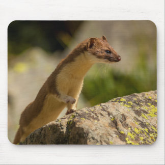 San Juan Mountains. Short-Tailed Weasel Mouse Pad