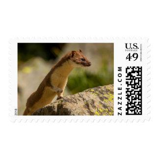 San Juan Mountains. Short-Tailed Weasel Postage Stamp