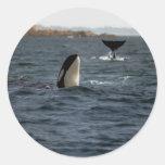 San Juan Whales Classic Round Sticker
