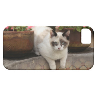 San Miguel de Allende Mexico Kitten rests in iPhone 5 Cases