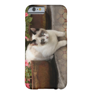 San Miguel de Allende Mexico Kitten rests in iPhone 6 Case