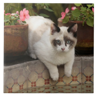 San Miguel de Allende, Mexico. Kitten rests in Ceramic Tile