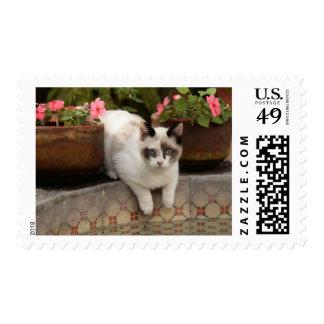 San Miguel de Allende, Mexico. Kitten rests in Postage