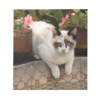San Miguel de Allende, México. Restos del gatito a Libretas Para Notas