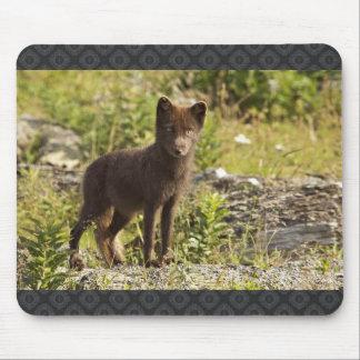 Sanak South fox , Arctic Fox Mouse Pads