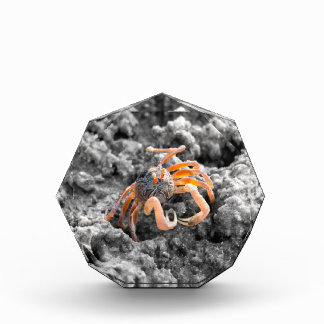 Sand bubbler crab acrylic award