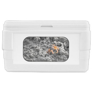 Sand bubbler crab ice chest
