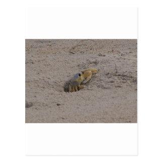 SAND CRAB AT THE BEACH POSTCARD