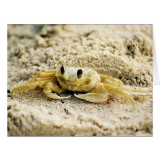 Sand Crab, Curacao Caribbean islands, Big Greeting Card