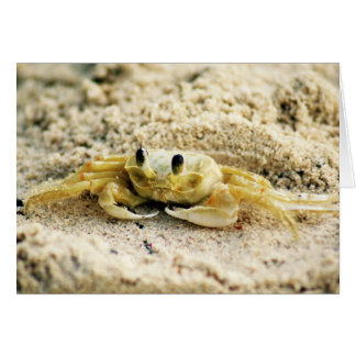 Sand Crab, Curacao, Caribbean islands, Greeting Card