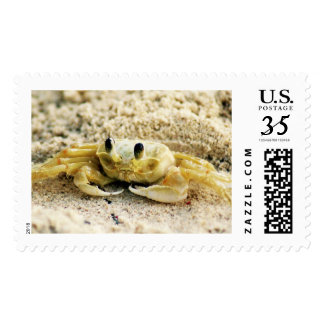 Sand Crab, Curacao, Caribbean islands, Large Photo Postage