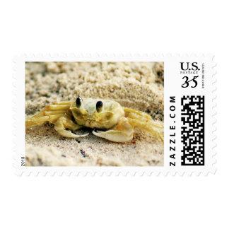 Sand Crab, Curacao Caribbean islands, Medium Photo Postage