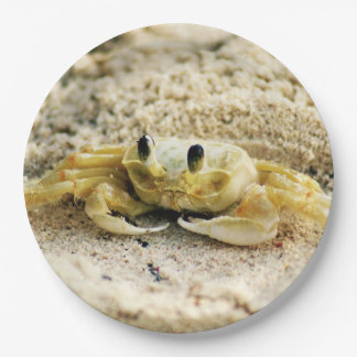 """Sand Crab, Curacao, Caribbean islands, Photo 9"""" Paper Plate"""