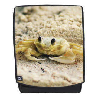 Sand Crab, Curacao, Caribbean islands, Photo Backpack