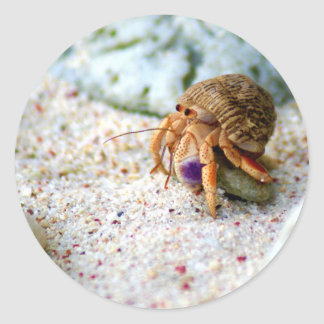 Sand Crab, Curacao, Caribbean islands, Photo Classic Round Sticker