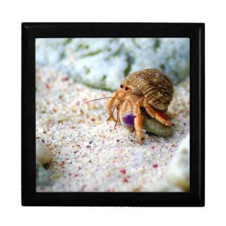 Sand Crab, Curacao, Caribbean islands, Photo Jewelry Box
