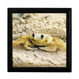 Sand Crab, Curacao, Caribbean islands, Photo Large Jewelry Box