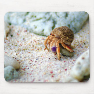 Sand Crab, Curacao, Caribbean islands, Photo Mouse Pad