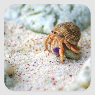 Sand Crab, Curacao, Caribbean islands, Photo Square Sticker