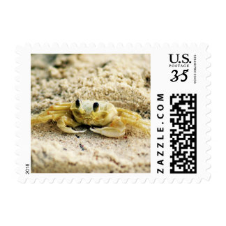 Sand Crab, Curacao, Caribbean islands, Small Photo Postage