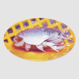 Sand Crabs (Photography) Oval Sticker