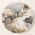 Sand Dollar and Pebbles Drink Coaster