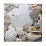 """Sand Dollar and Seashells Ceramic Tile<br><div class=""""desc"""">White sand dollar and tropical seashells tile.  Ceramic tile with a beach theme contains personal photography of Florida sea shells and a large,  arrowhead sand dollar.  Included are a little sea urchin,  sundial and lightning whelk.</div>"""