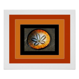 Sand Dollar: art from nature by David H. Roche Poster