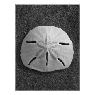 Sand Dollar (Black and White) Poster