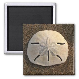 Sand Dollar (Color) Magnet