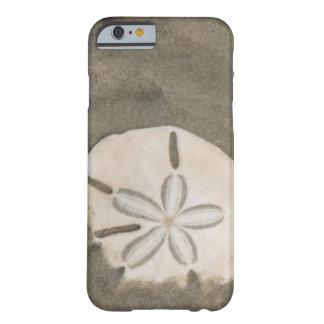 Sand dollar (Echinarachnius parma) Barely There iPhone 6 Case