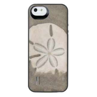 Sand dollar (Echinarachnius parma) iPhone SE/5/5s Battery Case