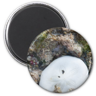 Sand Dollar in the Fiji Reef at Low Tide 2 Inch Round Magnet