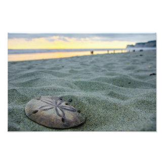 Sand Dollar On The Beach Photograph