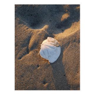 sand dollar on the beach postcard